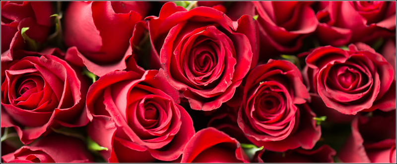 Qixi Festival - Red Roses are a perfect gift to give to your love